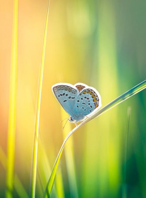 Schmetterling Hypnose Muenchen